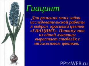 Для решения моих задач исследовательской работы я выбрал красивый цветок «ГИАЦИН