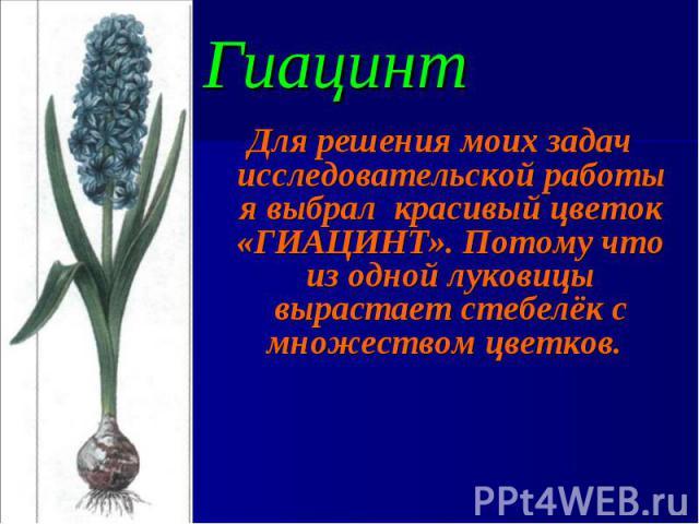 Для решения моих задач исследовательской работы я выбрал красивый цветок «ГИАЦИНТ». Потому что из одной луковицы вырастает стебелёк с множеством цветков. Для решения моих задач исследовательской работы я выбрал красивый цветок «ГИАЦИНТ». Потому что …