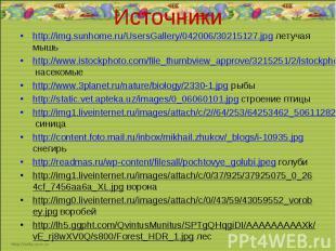 http://img.sunhome.ru/UsersGallery/042006/30215127.jpg летучая мышь http://img.s