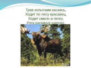 Трав копытами касаясь, Ходит по лесу красавец, Ходит смело и легко, Рога раскину