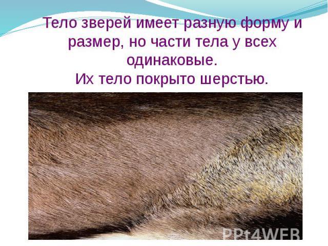 Тело зверей имеет разную форму и размер, но части тела у всех одинаковые. Их тело покрыто шерстью.