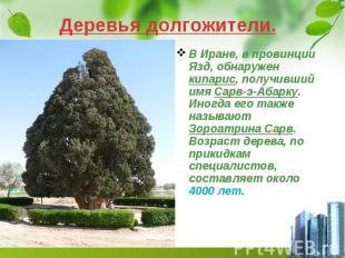 Деревья долгожители. В Иране, в провинции Язд, обнаружен кипарис, получивший имя