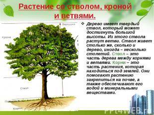 Растение со стволом, кроной и ветвями. Дерево имеет твердый ствол, который может