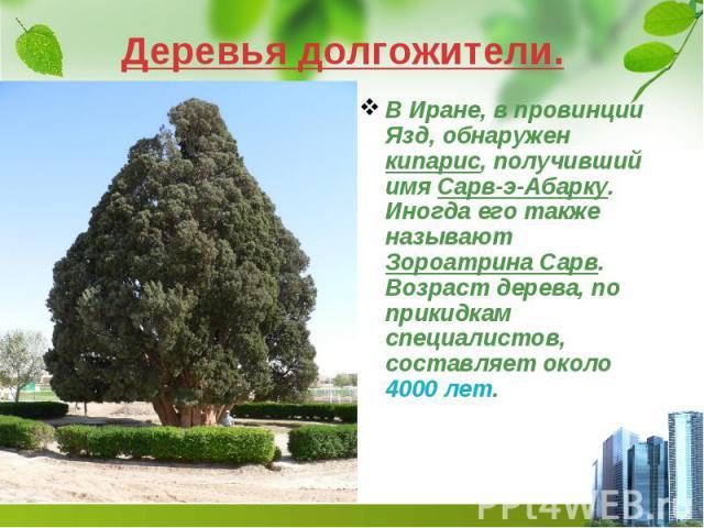 Деревья долгожители. В Иране, в провинции Язд, обнаружен кипарис, получивший имя Сарв-э-Абарку. Иногда его также называют Зороатрина Сарв. Возраст дерева, по прикидкам специалистов, составляет около 4000 лет.