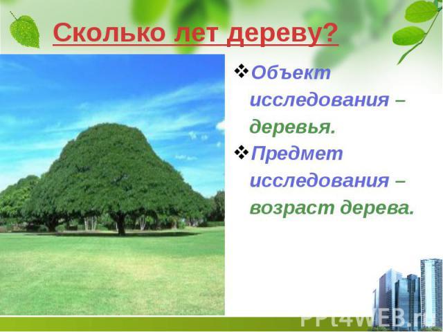 Сколько лет дереву? Объект исследования – деревья. Предмет исследования – возраст дерева.