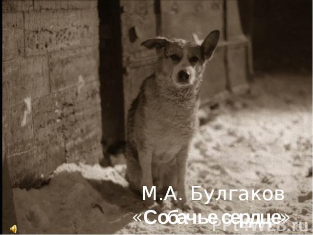 М.А. Булгаков «Собачье сердце»