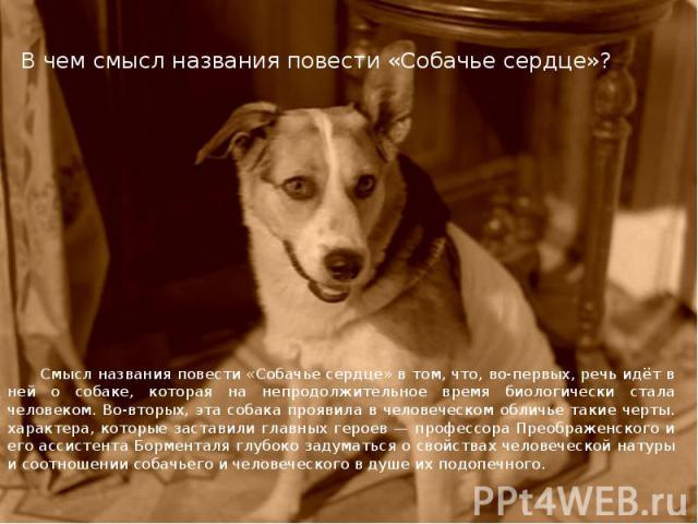 В чем смысл названия повести «Собачье сердце»? Смысл названия повести «Собачье сердце» в том, что, во-первых, речь идёт в ней о собаке, которая на непродолжительное время биологически стала человеком. Во-вторых, эта собака проявила в человеческом об…