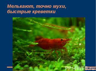 Мелькают, точно мухи, быстрые креветки