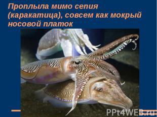 Проплыла мимо сепия (каракатица), совсем как мокрый носовой платок