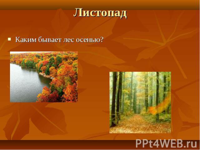Каким бывает лес осенью? Каким бывает лес осенью?