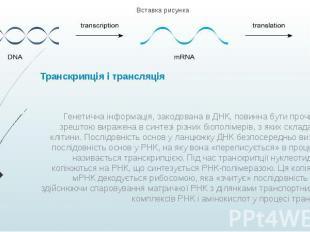 Транскрипція і трансляція Генетична інформація, закодована в ДНК, повинна бути п