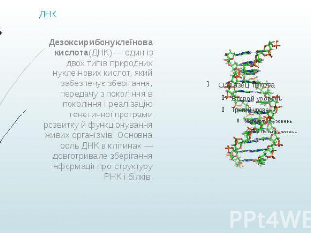 ДНК Дезоксирибонуклеїнова кислота(ДНК)— один із двох типів природних нуклеїнових кислот, який забезпечує зберігання, передачу з покоління в покоління і реалізацію генетичної програми розвитку й функціонування живих організмів. Основна роль ДНК…