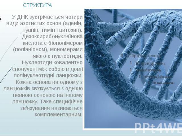 СТРУКТУРА У ДНК зустрічається чотири види азотистих основ (аденін, гуанін, тимін і цитозин). Дезоксирибонуклеїнова кислота є біополімером (поліаніоном), мономерами якого є нуклеотиди. Нуклеотиди ковалентно сполучені між собою в довгі полінуклеотидні…