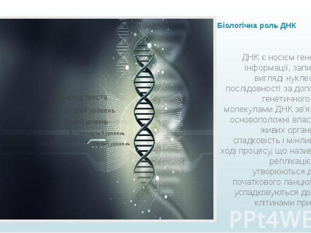 Біологічна роль ДНК ДНК є носієм генетичної інформації, записаної у вигляді нуклеотидної послідовності за допомогою генетичного коду. З молекулами ДНК зв'язані дві основоположні властивості живих організмів— спадковість і мінливість. У ході пр…