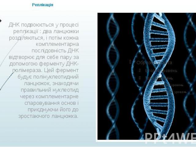 Реплікація ДНК подвоюється у процесі реплікації : два ланцюжки розділяються, і потім кожна комплементарна послідовність ДНК відтворює для себе пару за допомогою ферменту ДНК-полімераза. Цей фермент будує полінуклеотидний ланцюжок, знаходячи правильн…