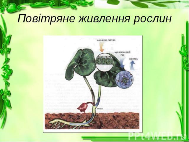 Повітряне живлення рослин