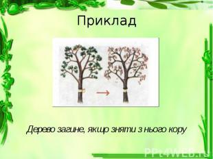 Приклад Дерево загине, якщо зняти з нього кору