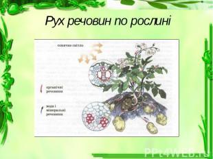 Рух речовин по рослині