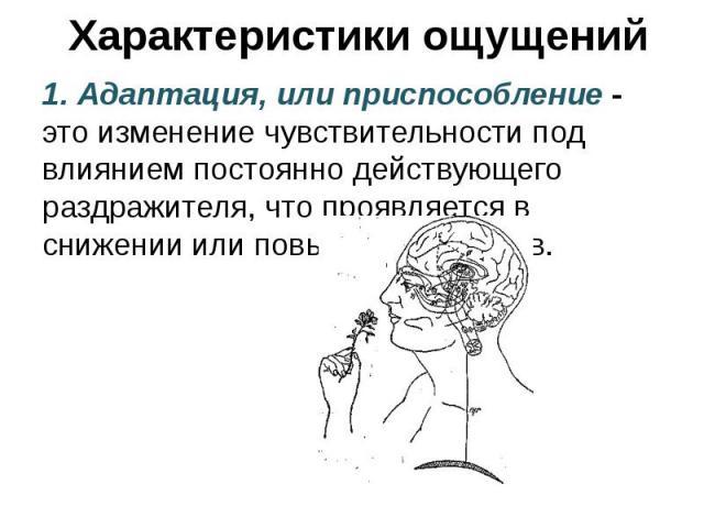 Характеристики ощущений 1. Адаптация, или приспособление - это изменение чувствительности под влиянием постоянно действующего раздражителя, что проявляется в снижении или повышении порогов.