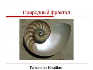 Природный фрактал Раковина Nautilus