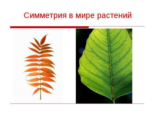 Симметрия в мире растений