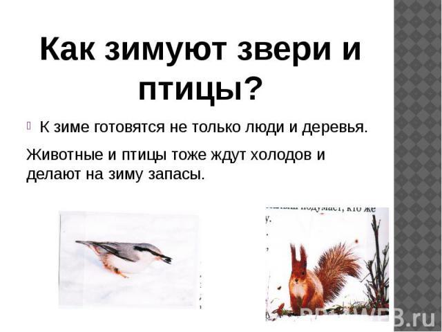 К зиме готовятся не только люди и деревья. К зиме готовятся не только люди и деревья. Животные и птицы тоже ждут холодов и делают на зиму запасы.
