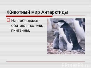 На побережье обитают тюлени, пингвины. На побережье обитают тюлени, пингвины.