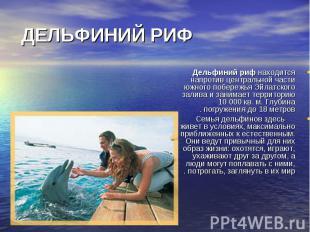 Дельфиний риф находится напротив центральной части южного побережья Эйлатского з