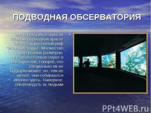 """Здесь находится одна из главных подводных красот Эйлата, коралловый риф """"Яп"""