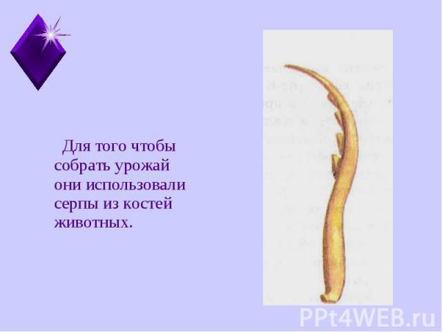 Для того чтобы собрать урожай они использовали серпы из костей животных. Для того чтобы собрать урожай они использовали серпы из костей животных.