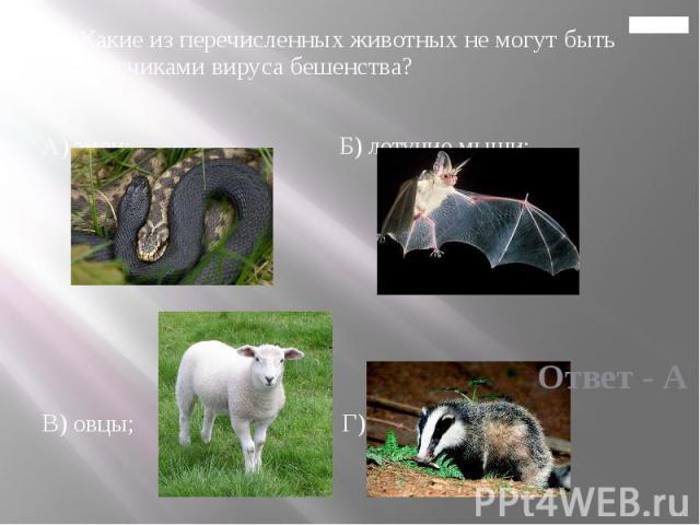 Главная 14. Какие из перечисленных животных не могут быть переносчиками вируса бешенства? А) змеи; Б) летучие мыши; В) овцы; Г) барсуки.
