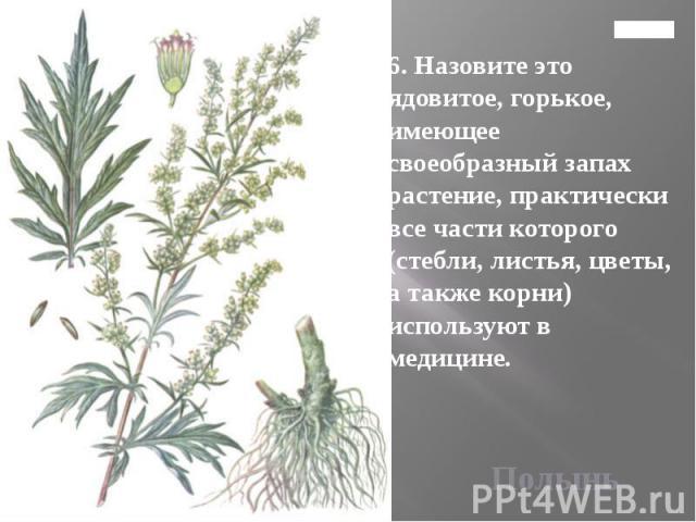 Главная 6. Назовите это ядовитое, горькое, имеющее своеобразный запах растение, практически все части которого (стебли, листья, цветы, а также корни) используют в медицине.