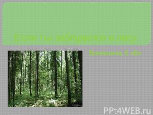 Если ты заблудился в лесу Ваняшина, 6 «Б»