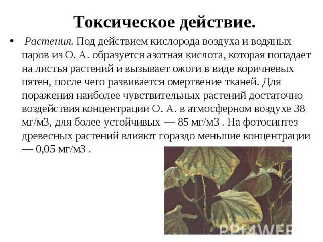 Токсическое действие. Растения.Под действием кислорода воздуха и водяных паров из О. А. образуется азотная кислота, которая попадает на листья растений и вызывает ожоги в виде коричневых пятен, после чего развивается омертвение тканей. Д…