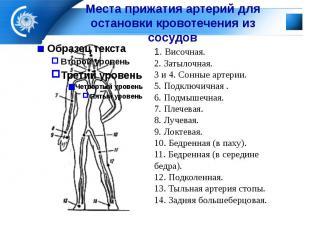 Места прижатия артерий для остановки кровотечения из сосудов