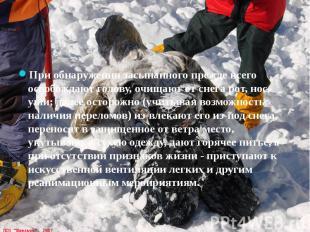 При обнаружении засыпанного прежде всего освобождают голову, очищают от снега ро