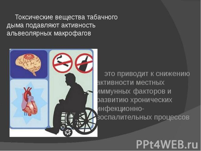 Токсические вещества табачного дыма подавляют активность альвеолярных макрофагов Токсические вещества табачного дыма подавляют активность альвеолярных макрофагов