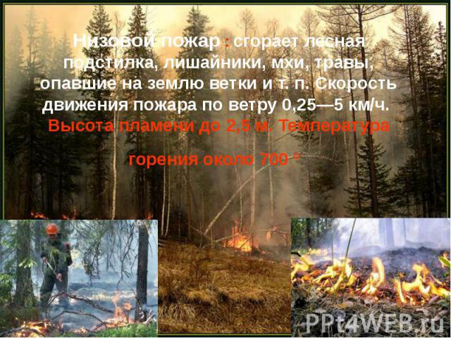 Низовой пожар : сгорает лесная подстилка, лишайники, мхи, травы, опавшие на землю ветки ит.п. Скорость движения пожара по ветру 0,25—5 км/ч. Высота пламени до 2,5м. Температура горения около 700°