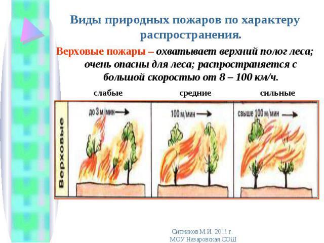 Виды природных пожаров по характеру распространения. Виды природных пожаров по характеру распространения. Верховые пожары – охватывает верхний полог леса; очень опасны для леса; распространяется с большой скоростью от 8 – 100 км/ч. слабые средние сильные