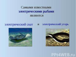 Самыми известными электрическими рыбами являются Самыми известными электрическим