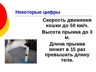 Некоторые цифры Скорость движения кошки до 50 км/ч. Высота прыжка до 3 м. Длина