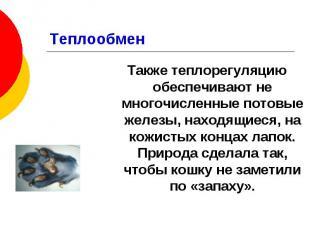 Теплообмен Также теплорегуляцию обеспечивают не многочисленные потовые железы, н