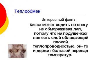Теплообмен Интересный факт: Кошка может ходить по снегу не обмораживая лап, пото