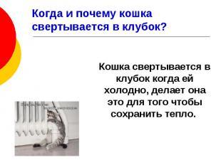 Когда и почему кошка свертывается в клубок? Кошка свертывается в клубок когда ей