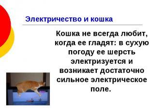 Электричество и кошка Кошка не всегда любит, когда ее гладят: в сухую погоду ее