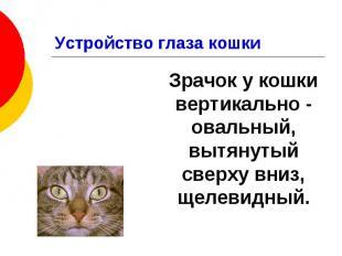 Устройство глаза кошки Зрачок у кошки вертикально - овальный, вытянутый сверху в