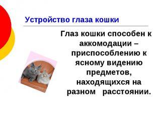 Устройство глаза кошки Глаз кошки способен к аккомодации – приспособлению к ясно
