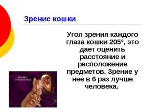 Зрение кошки Угол зрения каждого глаза кошки 205°, это дает оценить расстояние и