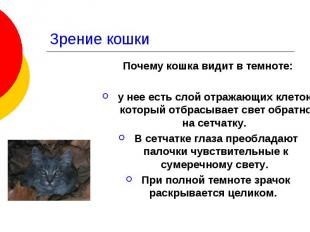 Зрение кошки Почему кошка видит в темноте: у нее есть слой отражающих клеток, ко
