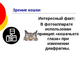 Зрение кошки Интересный факт: В фотоаппарате использован принцип «кошачьего глаз